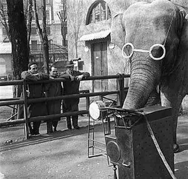 L'elefantessa Bombay