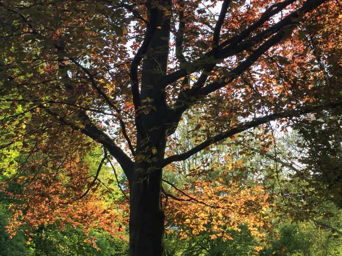 autunno ai giardini